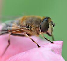 A Bug's Life I by Denitsa Prodanova