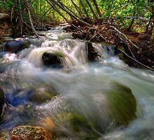 Galena Creek Nevada by Dianne Phelps