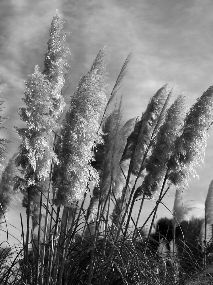 Noxious Weeds by Andrew  Makowiecki