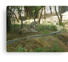 The Marvelous White Tigers Canvas Print
