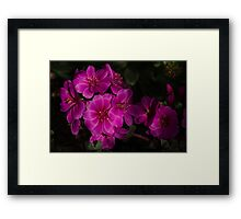 Silky Pink Cactus Blooms Framed Print