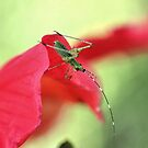 Green on Red by aprilann
