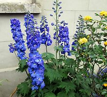 delphiniums and roses by margaret hanks