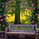 Bench in Rose Garden by KellyHeaton