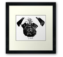 mops puppy white - french bulldog, cute, funny, dog Framed Print