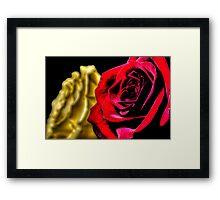 HDR - High Contrast Roses Framed Print