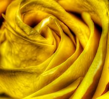 HDR - Yellow Rose Detail by Doug Greenwald