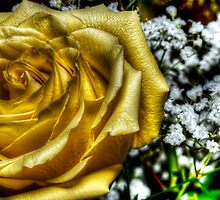 HDR - Yellow and White by Doug Greenwald