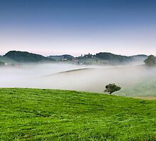 Alone in the mist by Peter Zajfrid
