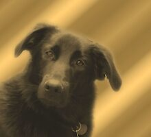 Cute Black Lab Mix Dog Face by SmilinEyes