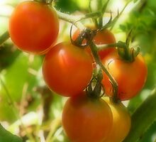 Red Cherry Tomatoes On The Vine by SmilinEyes