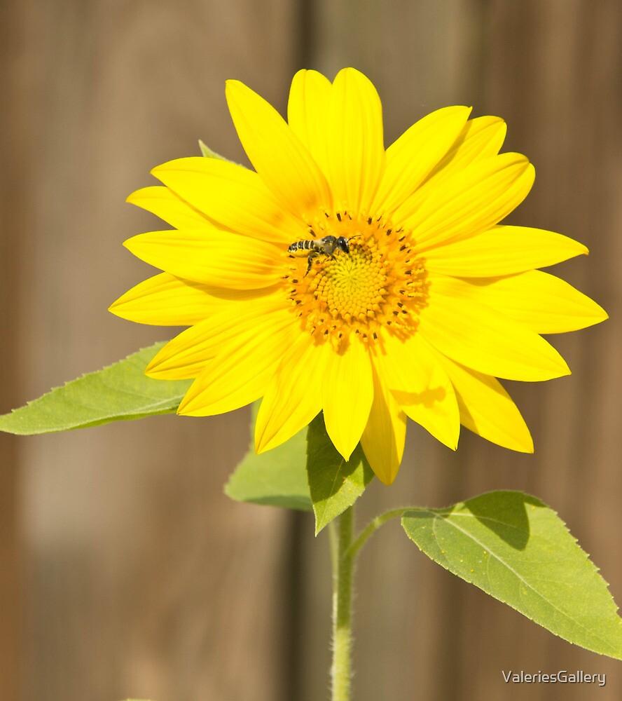 Bee on Sunflower by ValeriesGallery