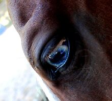 Blue Eyed Horse by TinkleBerry
