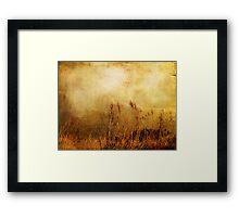 Beach Grasses of Gold... Framed Print