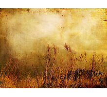 Beach Grasses of Gold... Photographic Print
