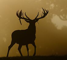 Stag Silhouette by WaylanderImages