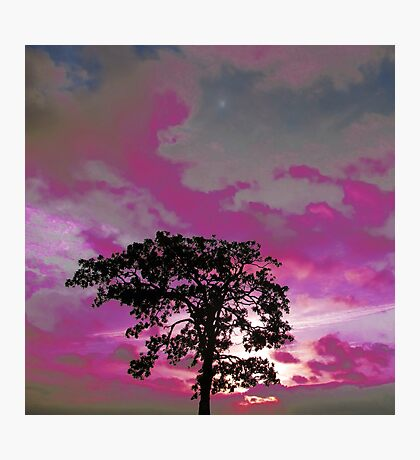 The Lonely Tree In Pink Photographic Print