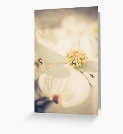 Soft Flower Greeting Card