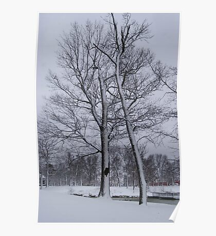 Winter Trees. Poster
