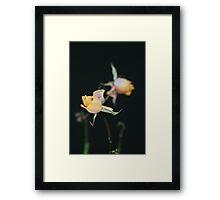Dried Rosebud Framed Print