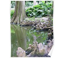 Reflections and Tree Roots Poster