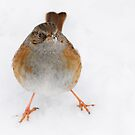 a chirpy little chappie by Andrew Jones