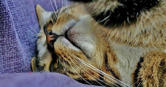 Millie Mac Hyper Cat by Ladymoose