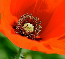 Eye-Popping Poppy! by Ainsley Kellar Creations