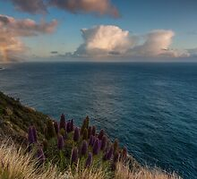 A Rainbow at Big Sur  by Richard Thelen