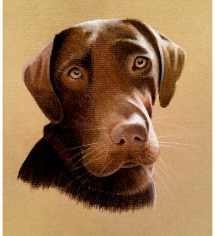 Alfie - the gorgeously handsome brown labrador Sticker
