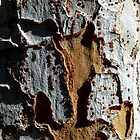 Jigsaw bark pattern. by ronsphotos