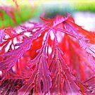 red Leaves by andreajansen