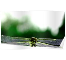 Dragonfly Green Poster