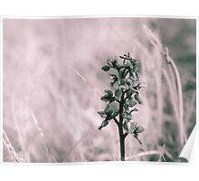 Infra Orchid, Malham, Yorkshire Dales National Park Poster