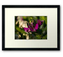 Pinkish Purple Swirls and Spirals  Framed Print