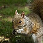 Squirrel by rosepetal2012