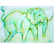 ELEPHANT in GREEN Photographic Print