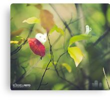 The first autumn leaf - Wandering forest 4 Canvas Print