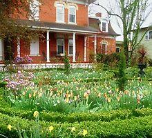 Tulips in Bloom by Nadya Johnson