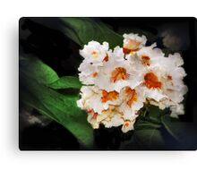 Catalpa Blossoms Canvas Print