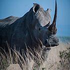 White Rhino (3) by Cara Barron