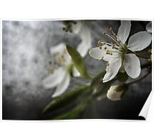Close up of white flowers Poster