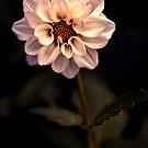 An insomniac amongst the flowers by alan shapiro