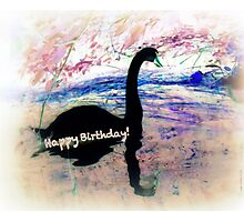 Swanning a Birthday Greeting  Photographic Print