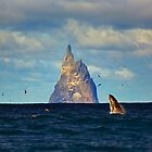 The Whale Shot by tinnieopener
