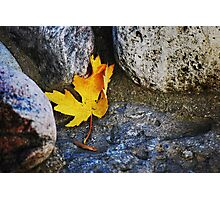 Homage to a leaf... Photographic Print
