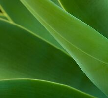 The Greenness of Things by tonipix