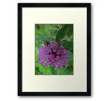 Beetle Bug Framed Print