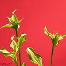 HOSTA SHOOTS by RGHunt