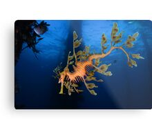 Phycodurus eques Metal Print